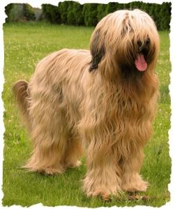 Hund Banyul