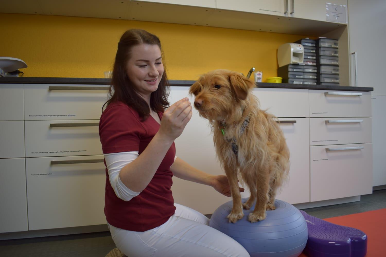 Tierpysiotherapie Kleintierzentrum