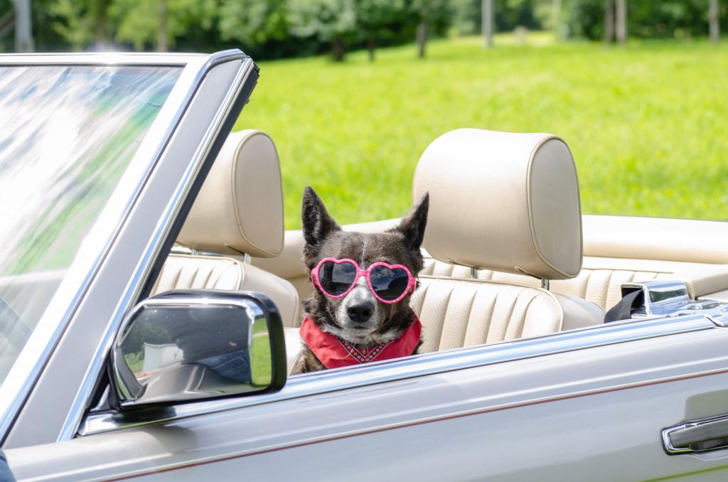 Urlaubsreise Hund